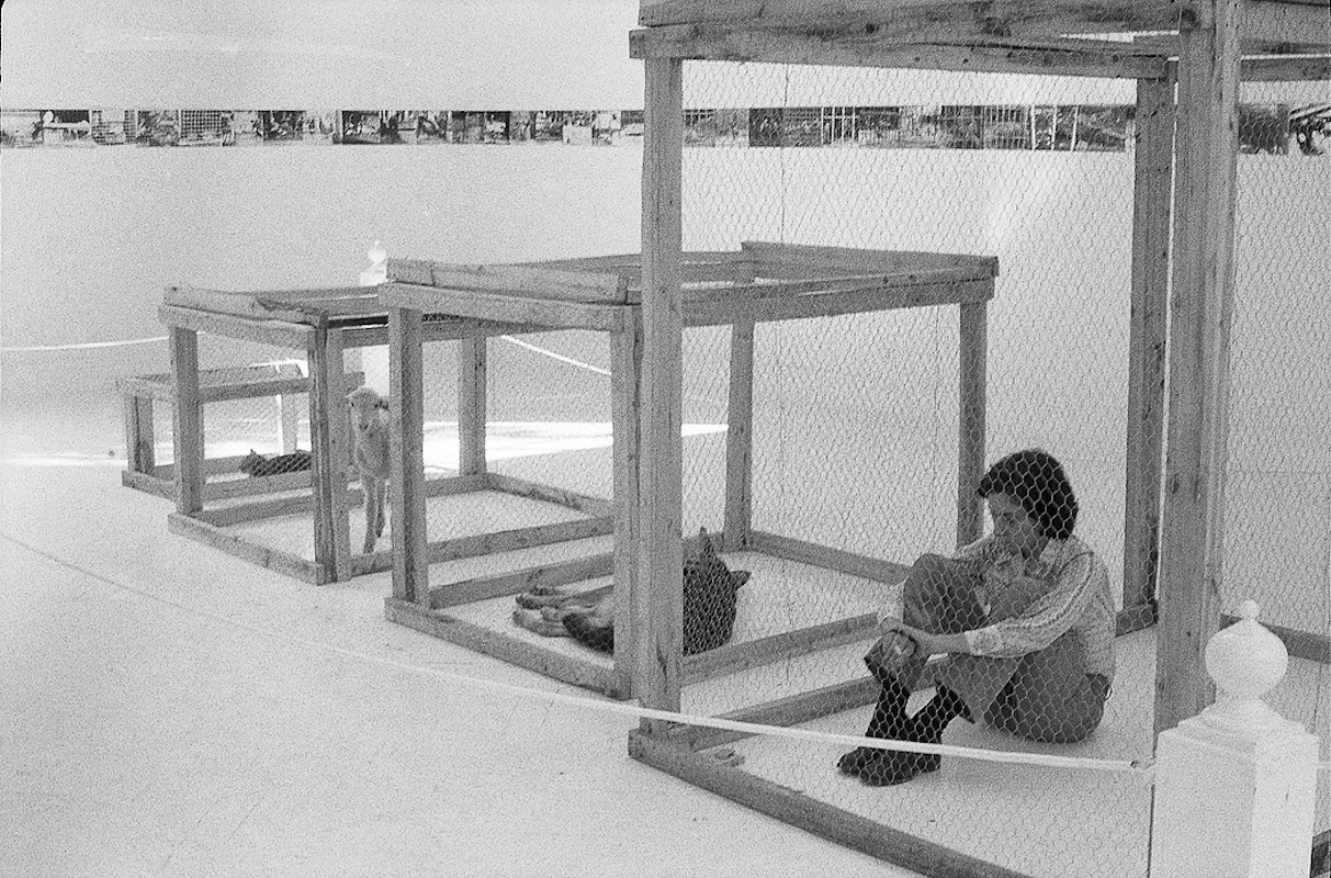 'Imatges del zoo'. Performance en la Sala Vinçon de Barcelona (1974)