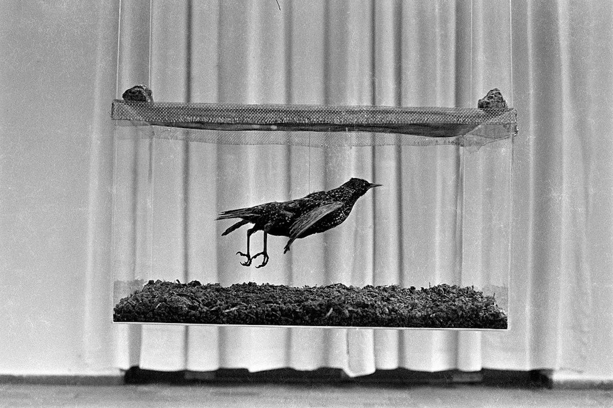 'Paisatge' (1979), en la Fundación Miró